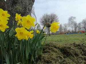 Bloemen en bomen van de Vrije Vogels